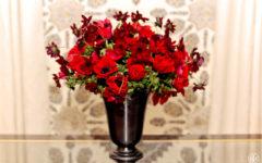 Anêmona, minha flor favorita da vez